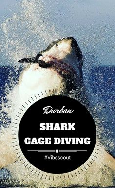Fun things to do, places to visit and must-see attractions in Durban. Stuff To Do, Things To Do, Kwazulu Natal, The Province, Tropical Paradise, Predator, Night Life, Shark, Places To Visit