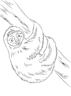 Cute Sloth Coloring Page From Sloths Category Select 29179 Printable Crafts Of Cartoons