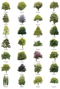 New landscape trees photoshop Ideas Landscape Plans, Landscape Architecture, Landscape Design, Garden Design, Computer Architecture, Japan Landscape, Farmhouse Architecture, Trees And Shrubs, Trees To Plant