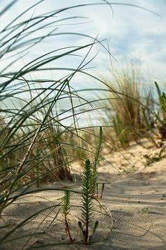 ^Dunes