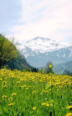 #nature #beautiful #place #nice #good #travel #picoftheday #loveit #seraph #seraphstore  www.seraphstore.com