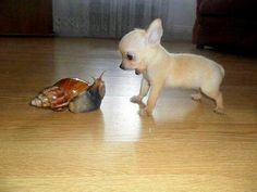 either that is a realllly tiny dog.... or a reallllly big snail (i'm hoping it's the snail ehehehe)