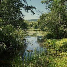 The marsh at Stockbridge Bowl #berkshires #summer #lake #massachusetts #hidden #inspiration #lenox #newengland