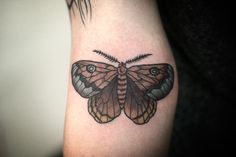 Insect - Moth | Alice Carrier