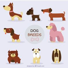 Nice dog breed collection Free Vector