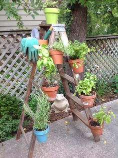 DIY herb garden on an old ladder. Clay pots secured to the ladder with Hangapot flower pot hangers. An easy small space, vertical, container garden.