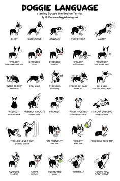 Uplifting So You Want A American Pit Bull Terrier Ideas. Fabulous So You Want A American Pit Bull Terrier Ideas. Cute Baby Animals, Funny Animals, Funny Animal Jokes, Funny Animal Photos, Small Animals, Farm Animals, Dog Body Language, Dog Sign Language, Sign Language Alphabet