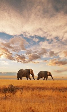 A wonderful view from #Kenya. Elephants walking free in the nature.
