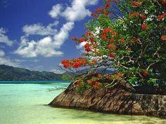 Webshots, the best in Wallpaper, Desktop Backgrounds, and Screen Savers since Seychelles Islands, Flora And Fauna, Vitis Vinifera, Healthy Life, Wallpaper, Celebrities, Water, Outdoor, Mothers