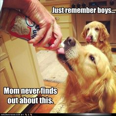 I love that the one in the background is licking his lips! And I would be the one letting my dogs do this!