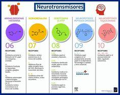Chart, Map, Medicine, Everything, Positive Psychology, Neuroscience, Summary, Human Body, Pharmacy