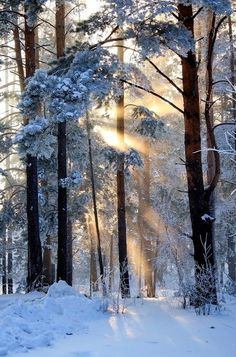 Winter Light... love when it shines through the trees!