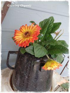 Growing Organic : Container Gardening