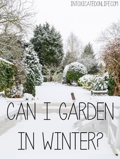 Learn how you can Garden In the Winter! @ IntoxicatedOnLife.com #Gardening #HealthyHome