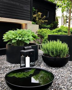 TERRACE BEFORE AND AFTER - Therese Knutsen Black Garden, Lush Green, Backyard Landscaping, Modern Landscaping, Modern Landscape Design, Small Backyard Patio, Modern Design, Garden Projects, Outdoor Gardens
