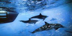 Les populations d'animaux marins ont diminué «de 49 % entre 1970 et 2012 »