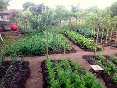 Flora Garden, Herb Garden, Veggie Patch, Herbs, Plants, Home Decor, Gardening, Decoration Home, Room Decor