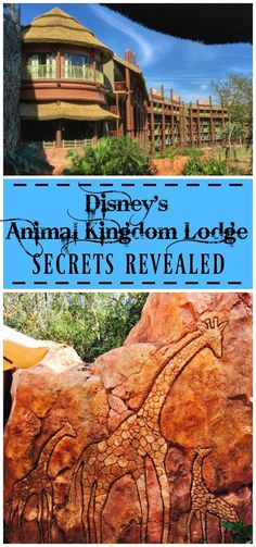Disney's Animal Kingdom Lodge Review - one of Walt Disney World's amazing deluxe resorts. SECRETS REVEALED!