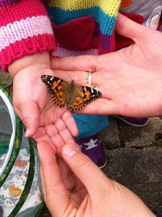@Mrs_Frog - #sensationalbutterflies @NHM_London