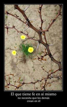 El que tiene fe en sí mismo no necesita que los demás crean en él. Danos like en Facebook: https://www.facebook.com/valoresparatodalavida