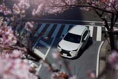 In Full Bloom – The Lexus NX F SPORT during the Japan cherry blossom season.