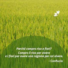 Quote by Confucio #quotes #quote #aforismi #nature #natura #flowers #citazioni #naturequotes #Confucio