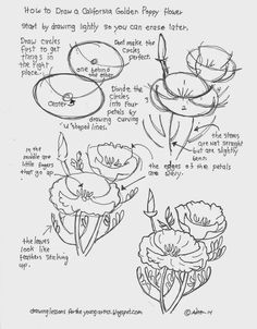 To Draw A California Golden Poppy Flower. Free Drawing Worksheet (How to Draw Worksheets for Young Artist) How To Draw A California Golden Poppy Flower. Free Drawing WorksheetHow To Draw A California Golden Poppy Flower. Realistic Drawings, Easy Drawings, Pencil Drawings, Flower Drawings, Flower Drawing Tutorials, Art Tutorials, Drawing Lessons, Drawing Techniques, Plant Drawing