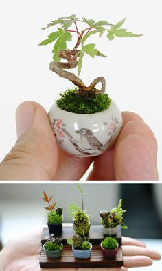 Teeny tiny bonsai trees in miniature pots that are smaller than your tumb.