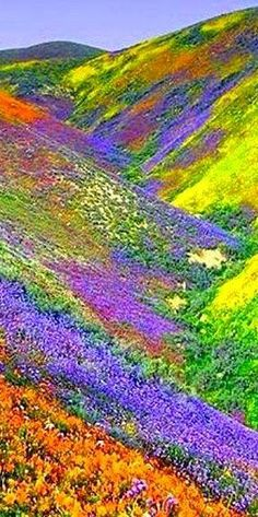 Valley of Flowers - Himalayas of the Uttaranchal, India