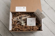Sprout the gift of giving! Eco-friendly, natural gift boxes for various occasions. Every box includes a succulent or air plant and up to two personal gifts. Show appreciation by sending one of our thank you boxes! Show Appreciation, Thank You Gifts, Air Plants, Gift Boxes, Giving, How To Dry Basil, Sprouts, Personalized Gifts, Succulents