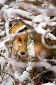 Cute Fox in album website: http://www.freeroamingphotography.com/galleries/wildlife/canines-and-felines/albums/page/2
