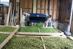 Local Hops - Frederick County, MD