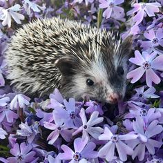 Save moments... Вдохновение и уют. Super Cute Animals, Cute Baby Animals, Animals And Pets, Small Animals, Wild Animals, Happy Hedgehog, Cute Hedgehog, Beautiful Birds, Animals Beautiful