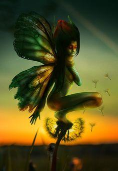 Dandelion by Marleen