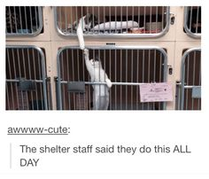 And if someone doesn't adopt them both together that would probably break their little furry hearts