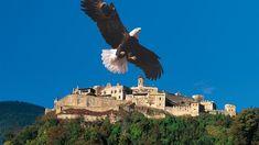 Die Adlerarena Burg Landskron ist ein privates Unternehmen und erhält sich durch Ihren Besuch! Mit Ihrem Eintritt sichern Sie unseren Vögeln ein artgerechtes Leben mit vielen Freiflügen. Dafür möchten wir uns schon jetzt bei Ihnen bedanken.  Auf der Adlerwarte gibt es Eulen & Greifvögel, eine spektakuläre Greifvogelschau & einen schönen Greifvogelpark. Villach, Eagles
