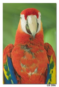 34 Best My Baby Macaws images in 2018 | Parrots, Feather, Feathers