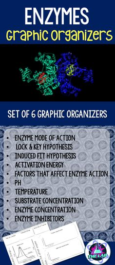 Series of 6 Graphic Organizers on Enzymes Includes: * Enzyme mode of action - Lock & Key Hypothesis - Induced Fit Hypothesis * Activation energy * Factors that affect enzyme action - pH - Temperature - Substrate concentration - Enzyme concentration *Enzyme inhibitors