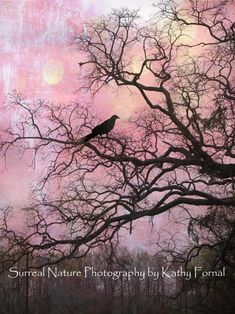 """Nature Photography, Surreal Trees, Ravens, Gothic, Purple, Pink, Haunting Ethereal Trees, Crows, Fine Art Photography 6"""" x 8"""""""