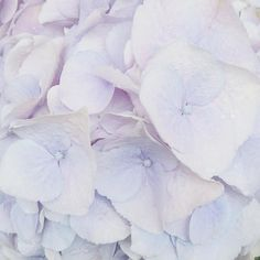Such a beautiful colour. Beautiful Flowers Pictures, Flower Pictures, Pretty Pictures, Pretty Pastel, Pretty Flowers, Flower Poetry, Collect Art, Wonderful Picture, Textures Patterns