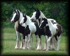 cc gypsy mares and foals Baby Horses, Draft Horses, Most Beautiful Horses, Pretty Horses, Baby Animals, Cute Animals, Gypsy Horse, Majestic Horse, Horse World
