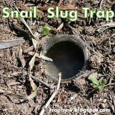 No need to waste good beer!!! I love the idea of making a concoction of yeast to get rid of the slugs. We are overwhelmed with slugs :/