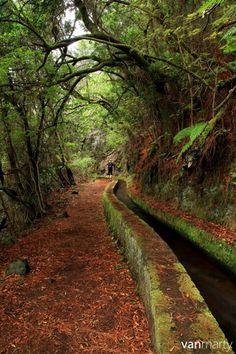 La Palma. Sendero de Marcos y Cordero
