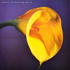 In band leader Michael Gira co-produced The Burning World alongside multi-instrumentalist Bill Laswell and continued to refine Music Albums, Music Songs, Indie Music, Mazzy Star, Vinyl Lp, Remember Who You Are, New York Post, Post Punk, Rock Music