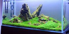 aquarium with Ancient Stone Tank size 100x50x50 Light Diy Led 90x1W Fertilizer Ferka products