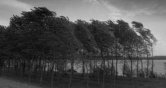 delta del po foto in bianco e nero - Cerca con Google
