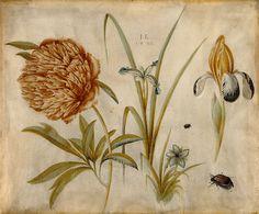 Hans Hoffmann -- 'Flowers and Beetles' 1582 Gouache and chalk on vellum