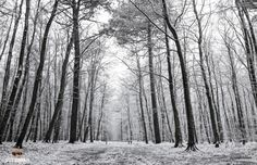 Sneeuw op Texel / Snow on Texel. #Texel #winter #paarden #horses #hogeberg #sneeuw #snow #trees #bomen #bos #forest #justinsinner #fotograaf #fotografie http://justinsinner.nl