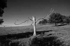 just a dead tree
