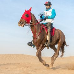 Hamdan in the Sheikh Mohammed bin Rashid Al Maktoum Endurance Race PHOTO: with Napoli Beautiful Horse Pictures, Beautiful Horses, Skydiving In Dubai, Handsome Men Quotes, Underwater Fish, Horse Names, Handsome Prince, My Prince Charming, Spartan Race